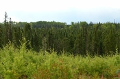 Developing Ontario's Forestry...