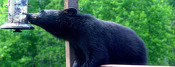 Be Bear Wise This Spring