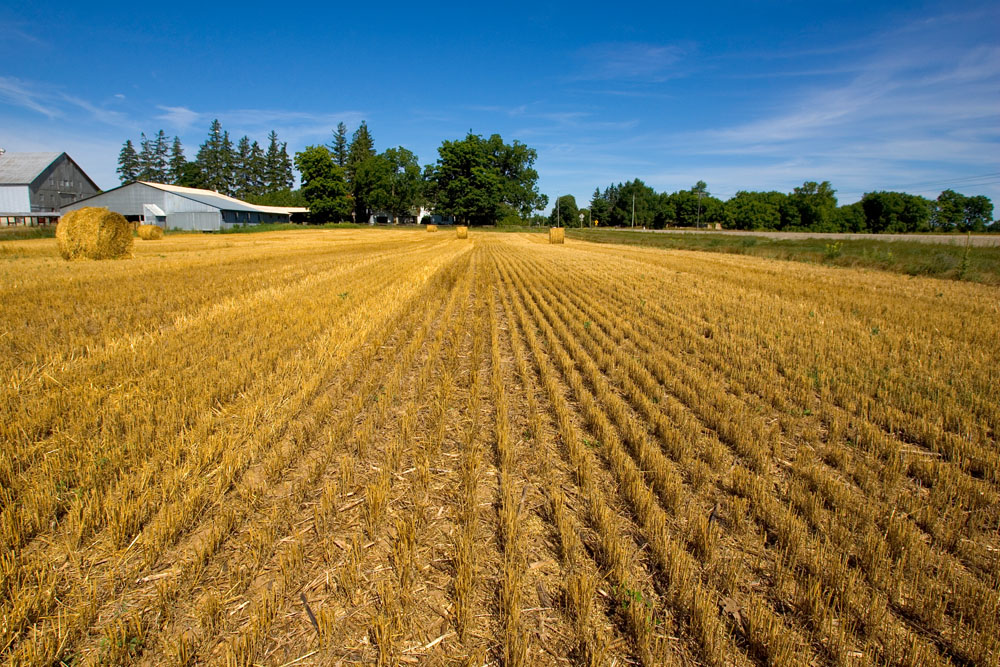Driving Growth for Ontario's Agri-Food Industry